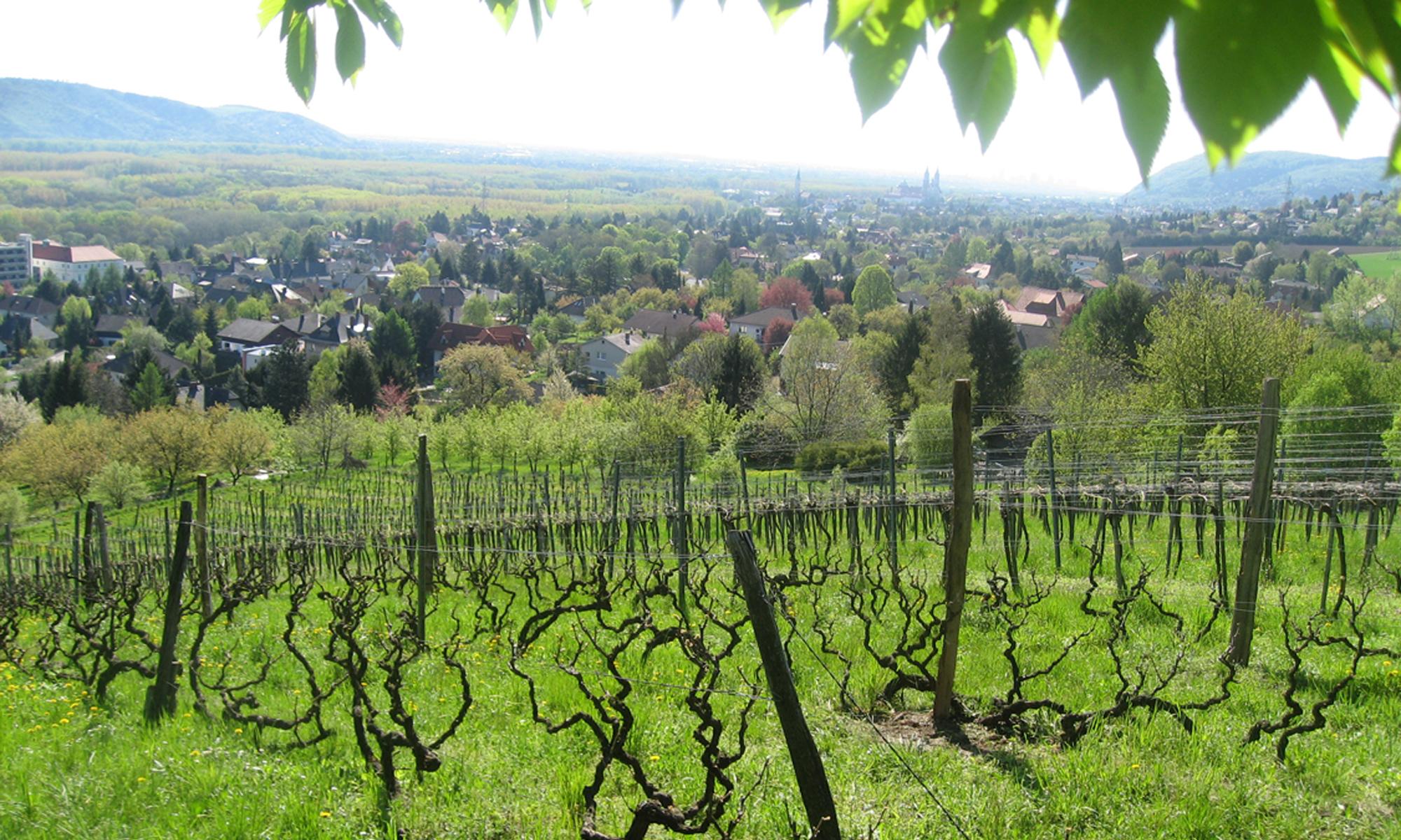 Weinbauverein Kritzendorf